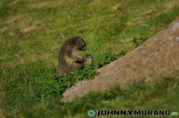 johnny_morano_4stars-001-4