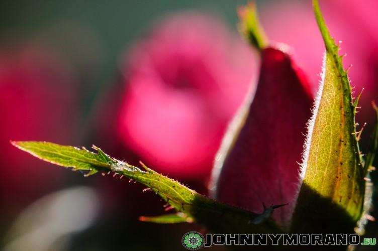 johnny_morano_4stars-024