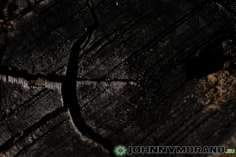 johnny_morano_4stars-033
