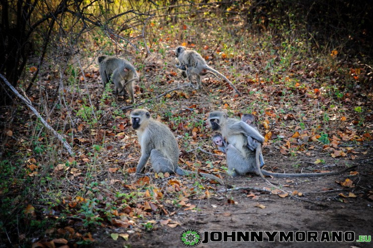johnny_morano_krugerpark_2013-001