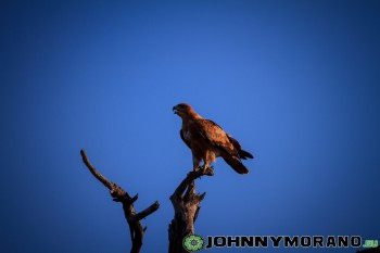 johnny_morano_krugerpark_2013-002