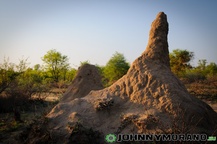 johnny_morano_krugerpark_2013-003