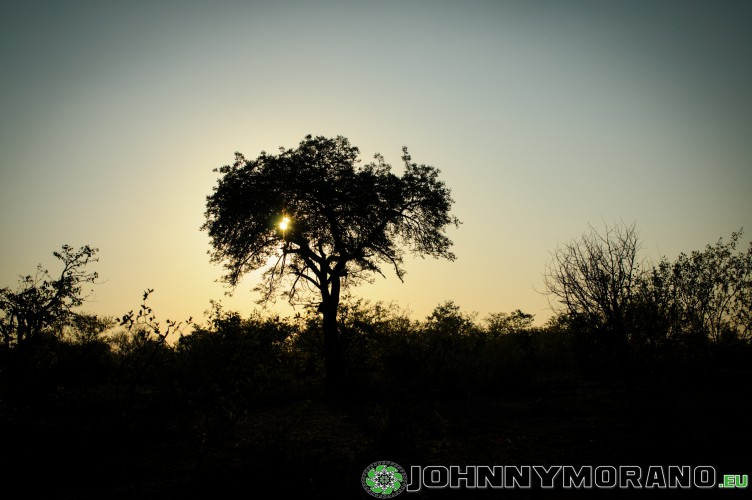 johnny_morano_krugerpark_2013-004