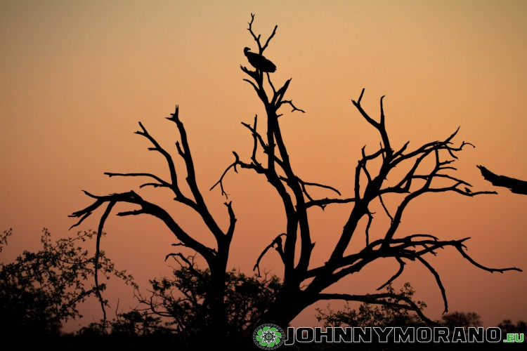 johnny_morano_krugerpark_2013-006