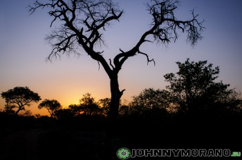 johnny_morano_krugerpark_2013-007