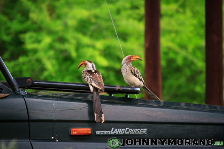 johnny_morano_krugerpark_2013-008