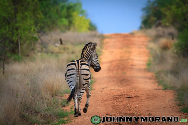 johnny_morano_krugerpark_2013-009