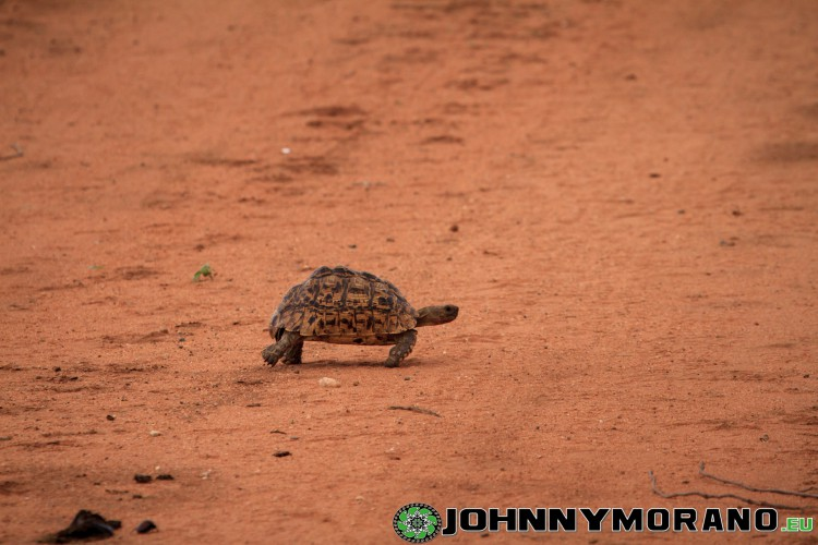 johnny_morano_krugerpark_2013-012