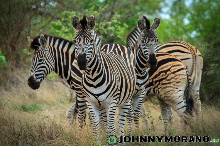 johnny_morano_krugerpark_2013-017