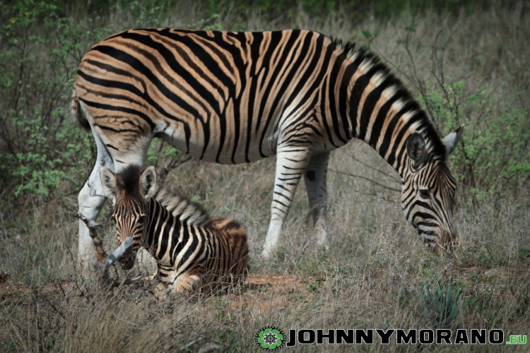 johnny_morano_krugerpark_2013-018