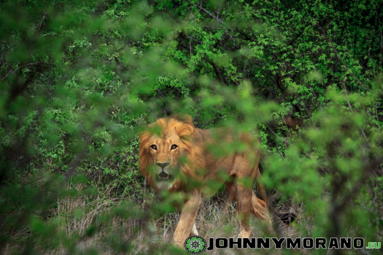 johnny_morano_krugerpark_2013-019
