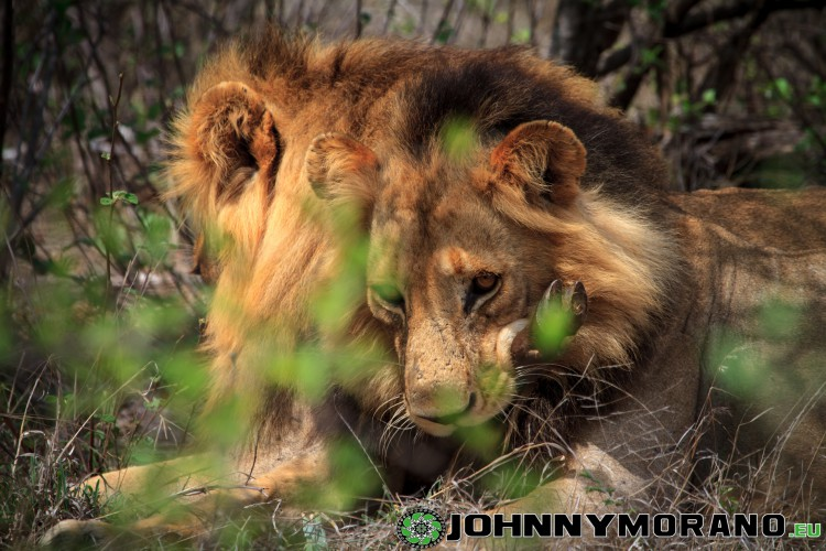 johnny_morano_krugerpark_2013-020