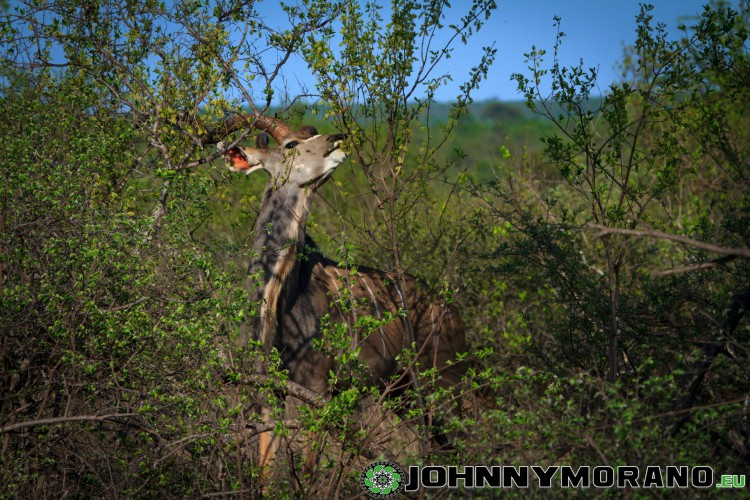 johnny_morano_krugerpark_2013-021