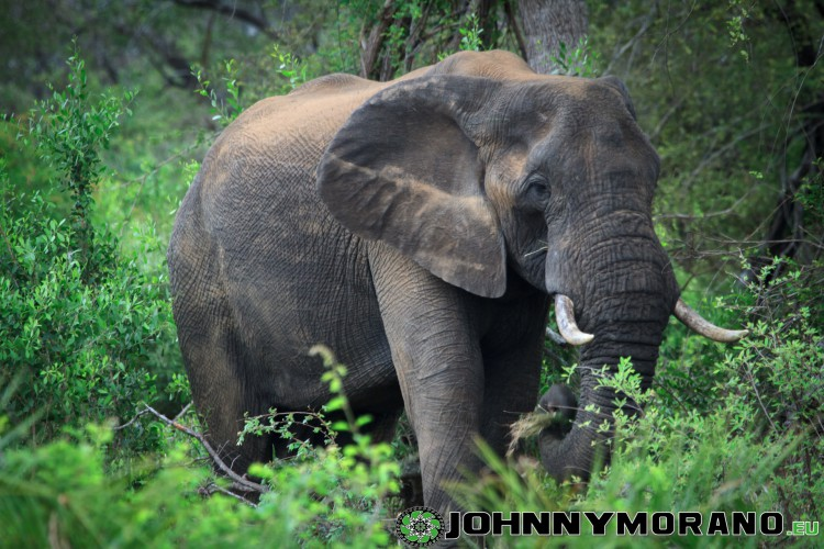 johnny_morano_krugerpark_2013-025
