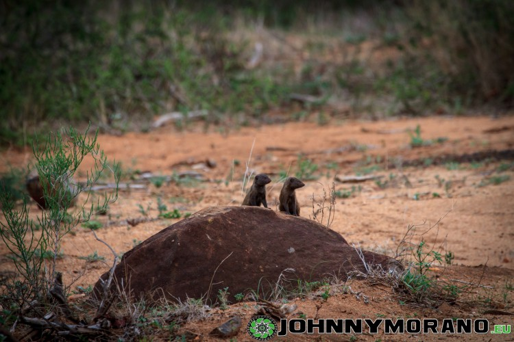 johnny_morano_krugerpark_2013-027