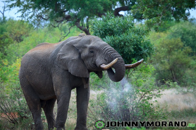 johnny_morano_krugerpark_2013-028