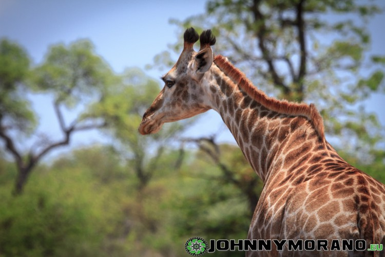 johnny_morano_krugerpark_2013-030
