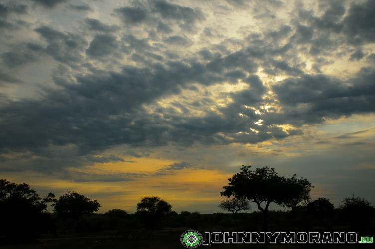 johnny_morano_krugerpark_2013-031