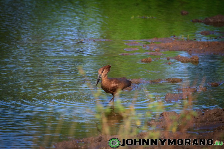 johnny_morano_krugerpark_2013-033