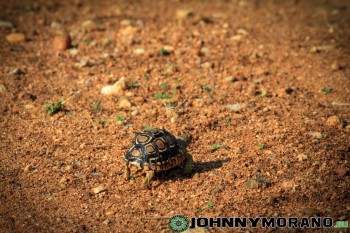 johnny_morano_krugerpark_2013-034