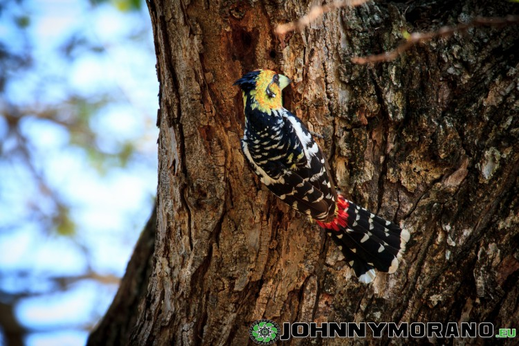 johnny_morano_krugerpark_2013-035