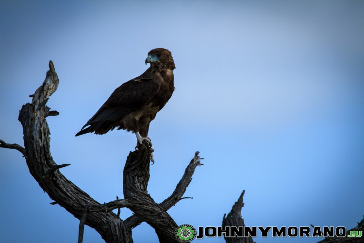 johnny_morano_krugerpark_2013-036