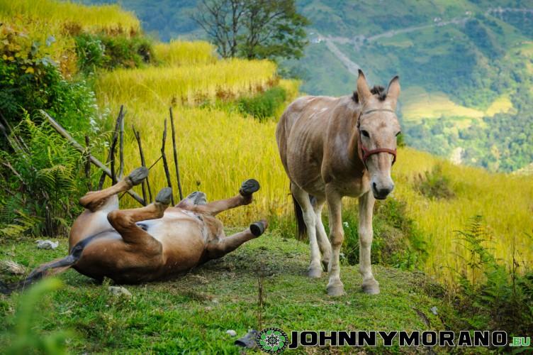johnny_morano_nepal_2013-016