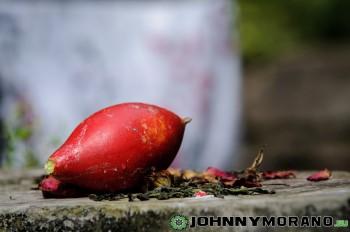 johnny_morano_nepal_2013-053